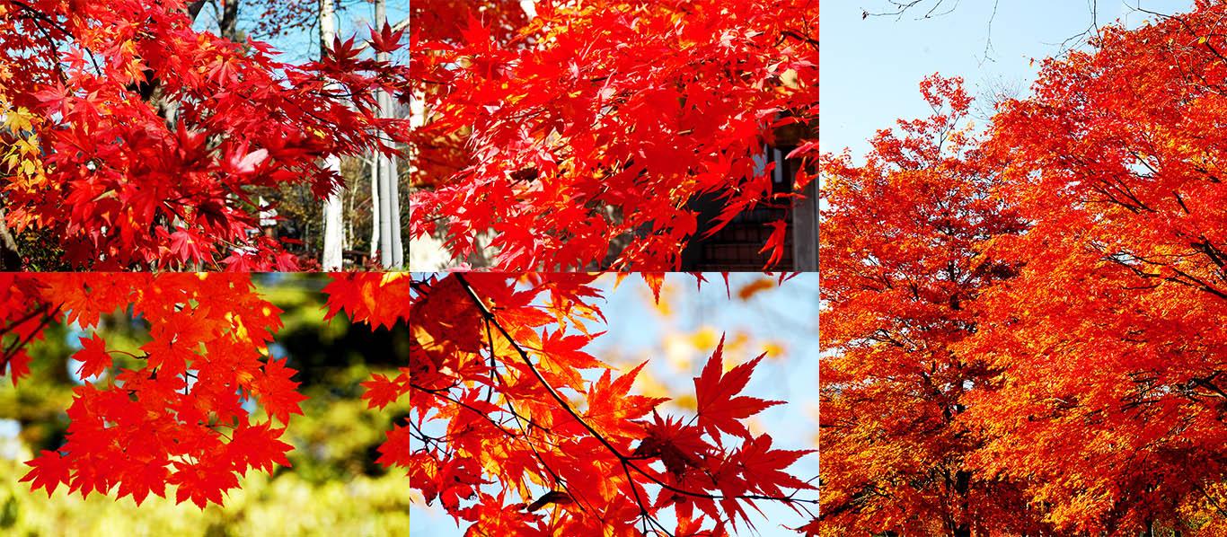安比周辺の紅葉
